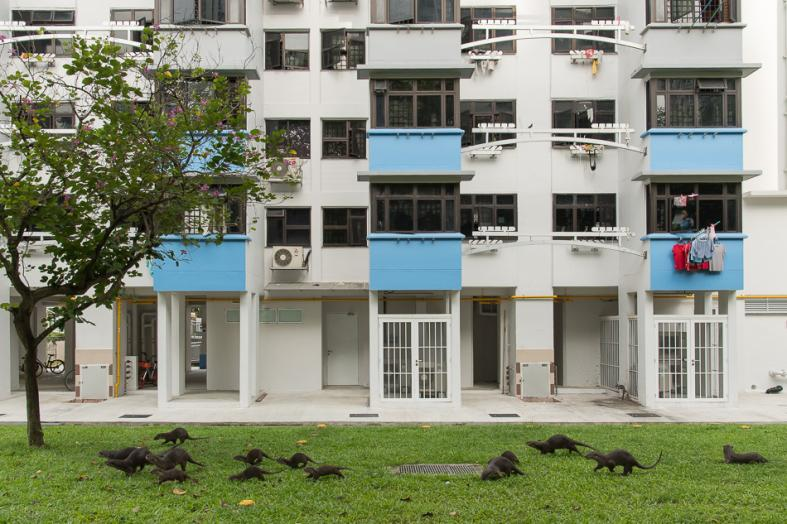 The otters are becoming synonymous with Singapore. PHOTO: STEFANO UNTERTHINER