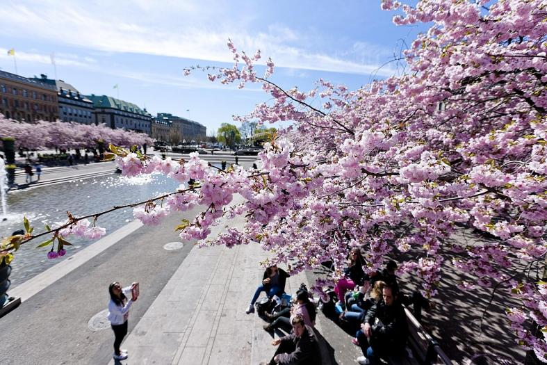 Done with Japan? These are the prettiest sakura spots outside Asia