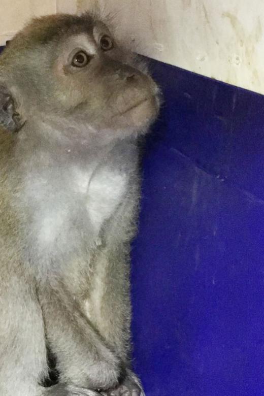 Lessons from the Segar Road monkey saga