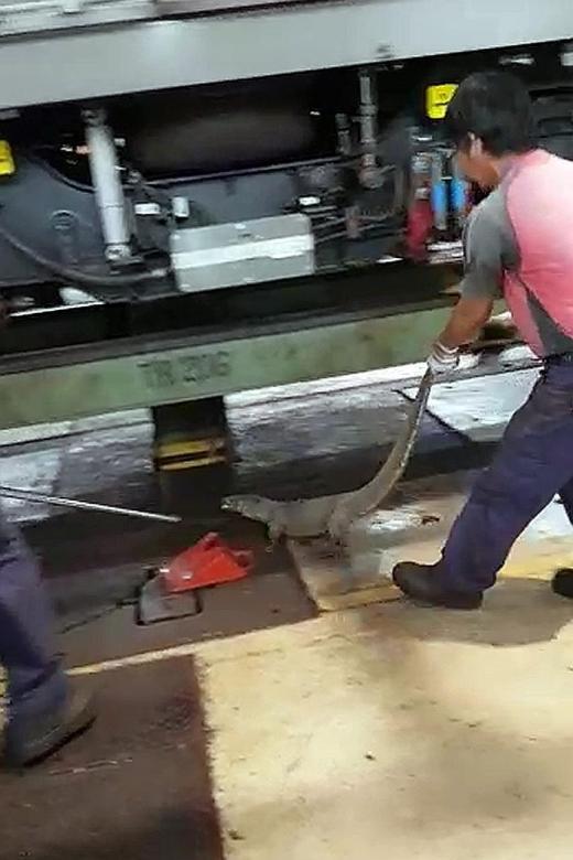 Monitor lizard found in MRT train depot