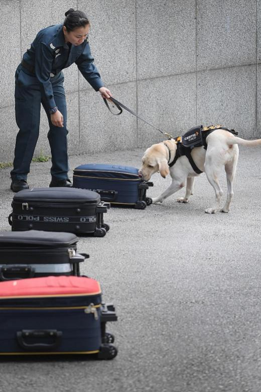 Certis Cisco launches first auxiliary police K-9 unit here