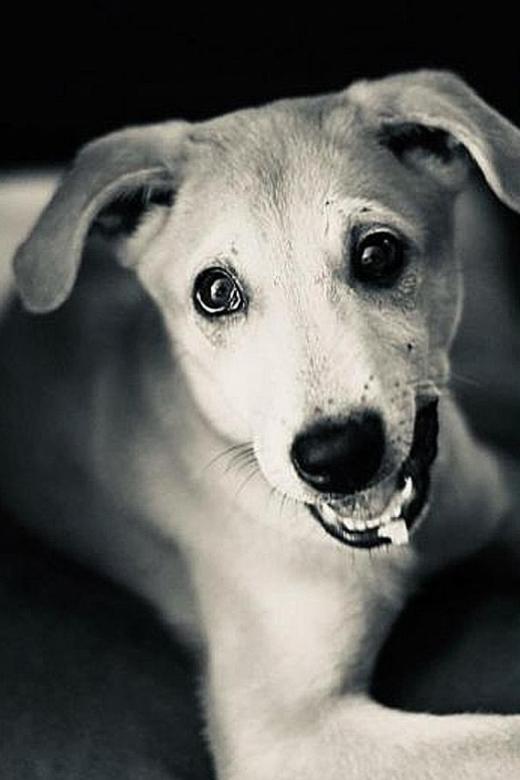 No breach found in euthanasia of Loki the dog: AVS