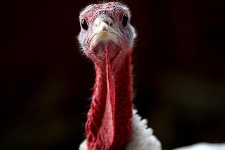 Peta wants memorial for road crash victims – turkeys