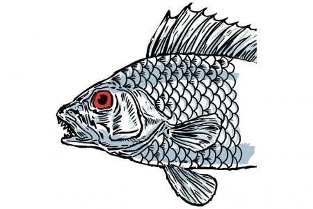 Bigger fish unveiled in kelong e-book