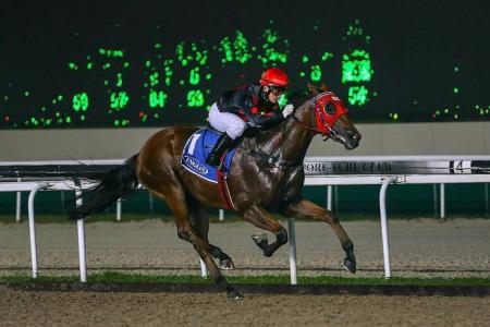 Castor makes it a one-horse race