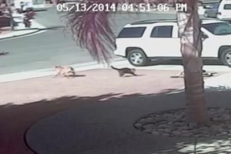 Cat saves young boy from vicious dog attack