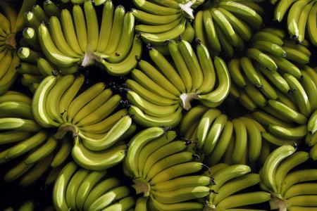 Bananageddon?