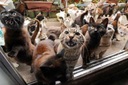 Cat lovers, add this to your bucket list