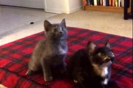 Is this for real? Two cats synchronise their dance moves