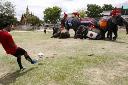 Watch schoolboys take on elephants