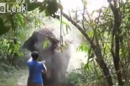 Did he really stop a charging elephant with a show of hand?