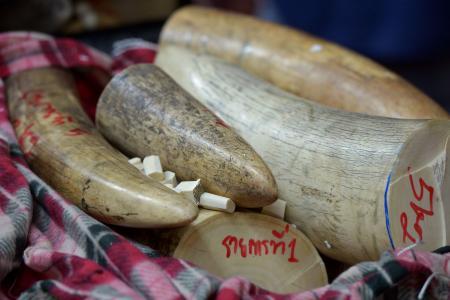 Thai ivory boom 'fuelling Africa elephant poaching crisis'