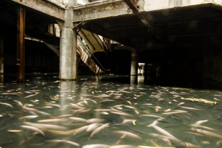 Fish stage coup in abandoned Thai mall