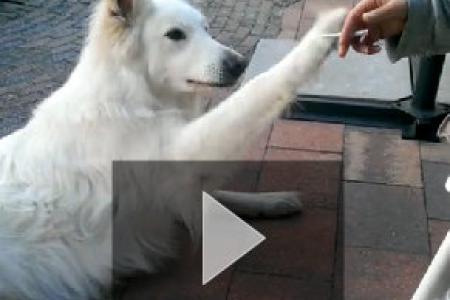 WATCH: Dog shakes head at smoking habit