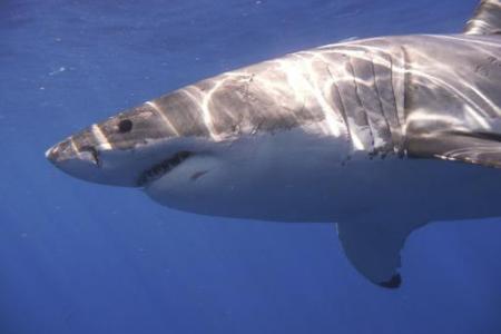 Shark attack survivor: I grabbed it by nose