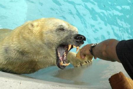Man tried gorging bear's eyes to stop attack