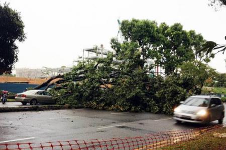 Heavy rain, strong winds wreak havoc in S'pore