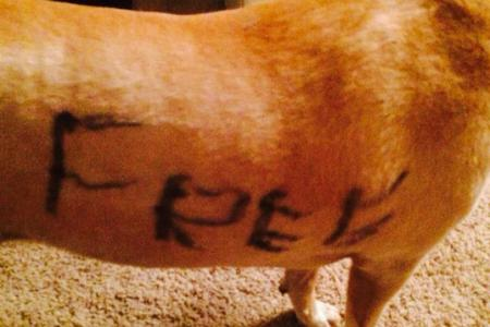 """Dog abandoned with """"I need a home"""" scrawled on it"""