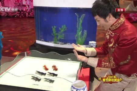 Awesome magician controls goldfish