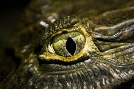 Croc on a plane: Reptile may have caused plane crash