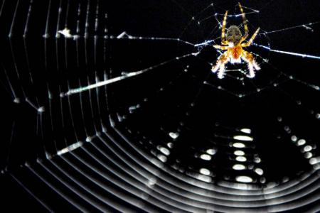 Man tries to use spray and lighter to kill spider, burns down house