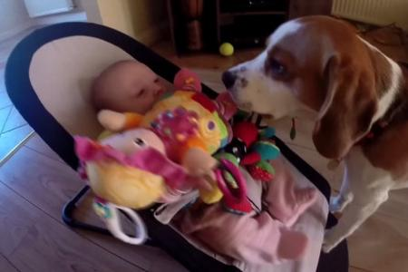 Dog apologises to baby for stealing toy