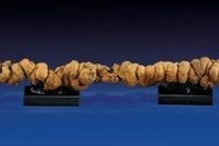 Longest fossilised poop goes on sale