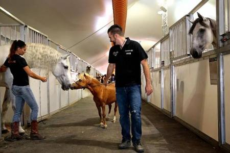Horse destined for slaughterhouse now a star with Cavalia show