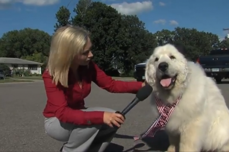 Duke the dog elected new mayor in US town