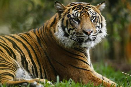 New York bans tiger selfies after dangerous spike in trend