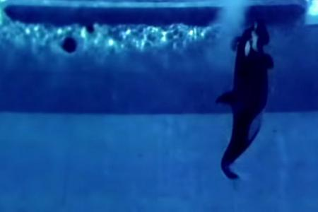 SeaWorld: Fallout from captive killer whales documentary hurt profits