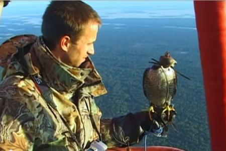 Watch falcon dive at 290kmh in BBC speed test