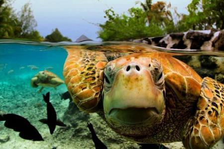 GALLERY: 7 incredible pictures of the underwater world