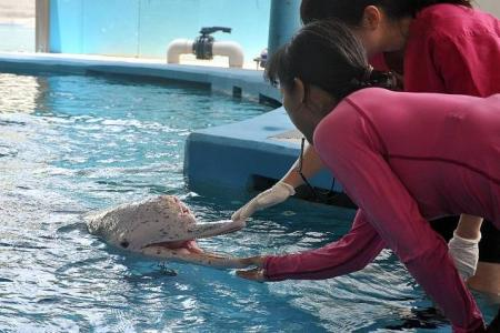 No response from Underwater World Singapore after marine experts slam dolphins' living conditions