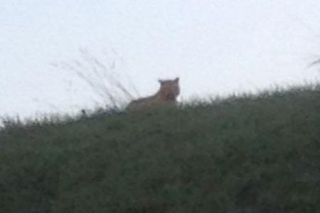 Tiger on the loose near Paris sparks police hunt