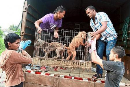 About 100 animals rescued after police raid foul-smelling bungalow in Selangor
