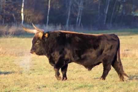 What the Heck? Farmer forced to destroy most of 'Nazi' cow herd