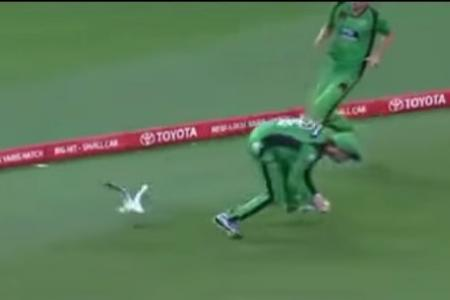 WATCH: It's alive! Seagull comes back to life after taking cricket ball smasher
