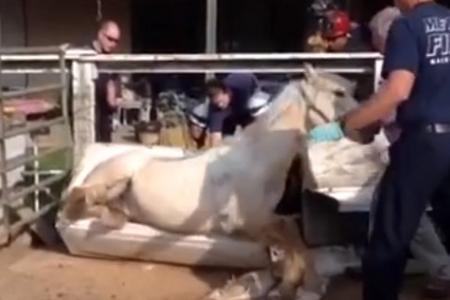 Watch: Firefighters rescue horse stuck in a bathtub