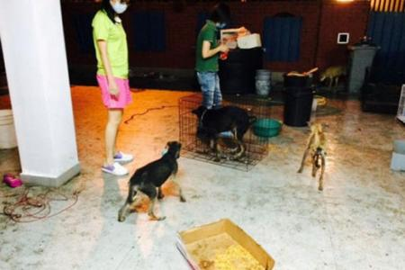 S'porean shocked to find 30 starving dogs in Johor house he rented out to vet