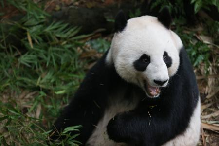 Indonesian Police out to stop obscene panda pyjamas
