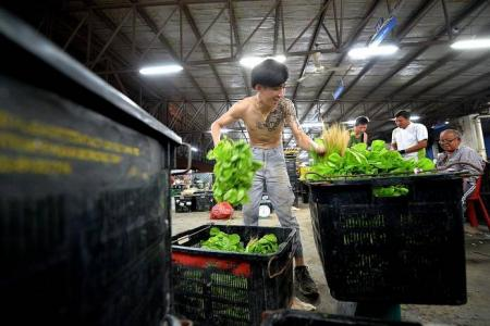 Green rush for vegetable wholesalers at Pasir Panjang Wholesale Centre