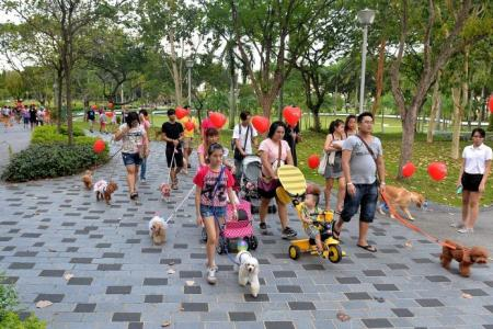 Get healthier hearts through dog walking