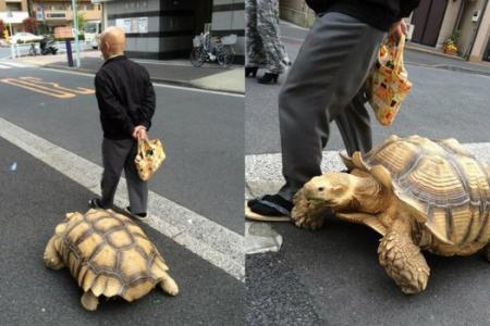 Man seen walking his tortoise in Japan