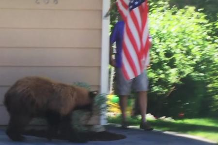Man and bear cross paths, scare each other