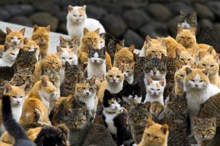 Australia declares war... on cats?!