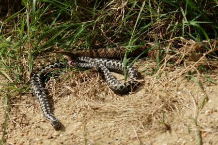Teen falls 30m off cliff, gets bitten by venomous snake while climbing up