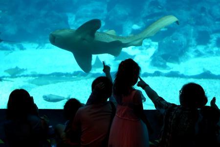 Worker hurt after shark rams his face in RWS aquarium