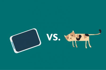 What would you grab first if your house were on fire: your cat or your phone?