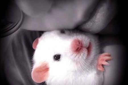 S'porean's three hamsters become YouTube stars